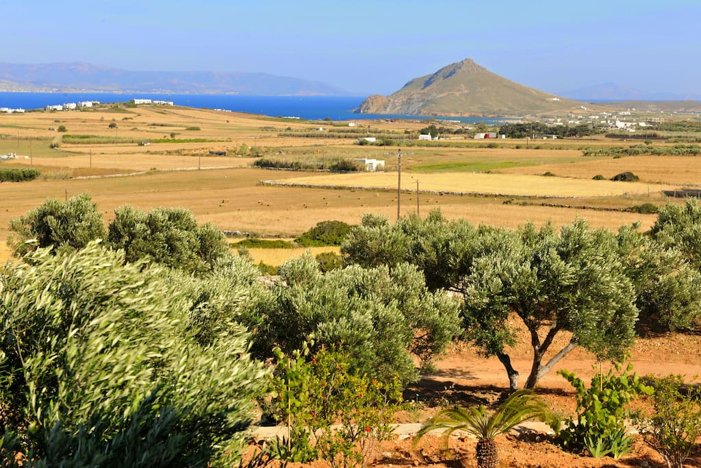 Amazing view! Olive trees are grown up on an completely natural way so  every year we can get pure virgin olive oil.