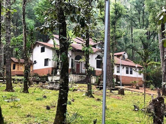 Casa entre árboles