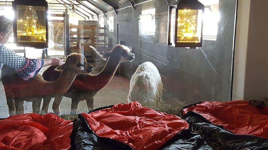 schlafen im Heu Alpaka Ranczo AFF Pokoj 5