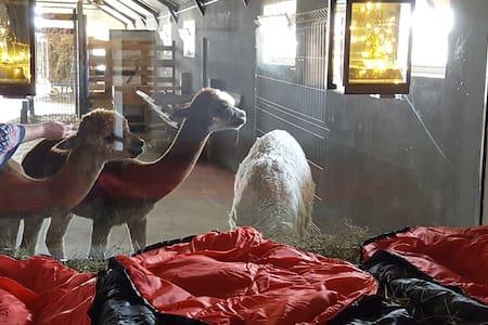 schlafen im Heu Alpaka Ranczo AFF Pokoj 7