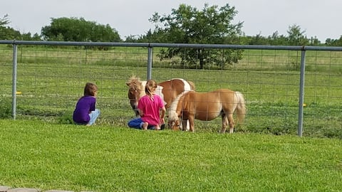 Private Guest House, Mini-Horses, Pool,Staycation