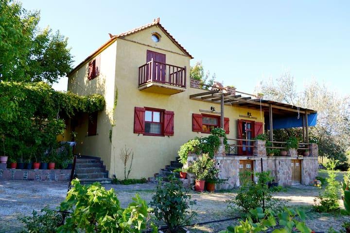 Ampeli Villas - Niselia - House