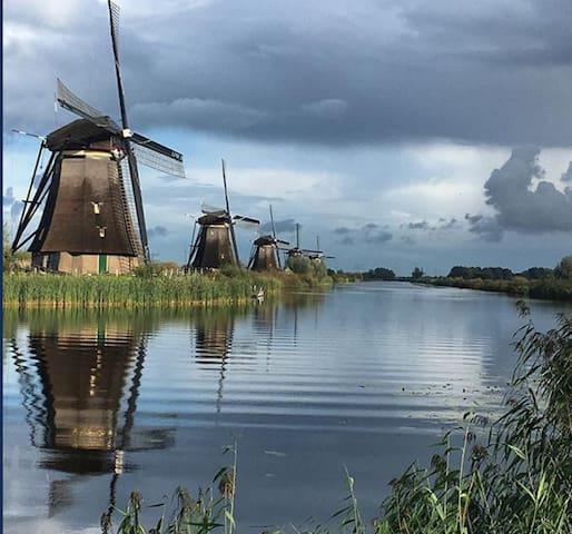 Rotterdam mills/molinos