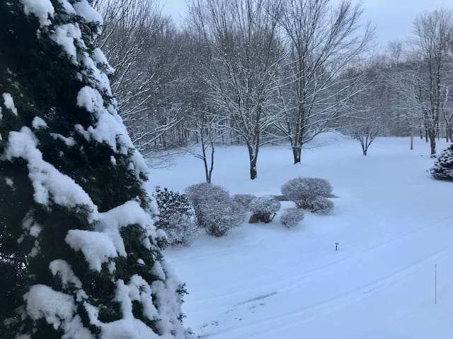 Amazing in the Snow