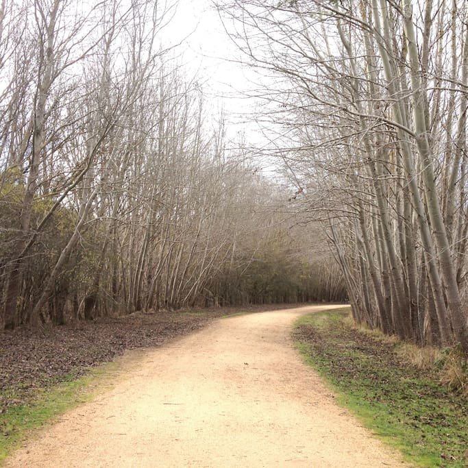 Enjoy many and varied walks in our area... in all seasons..