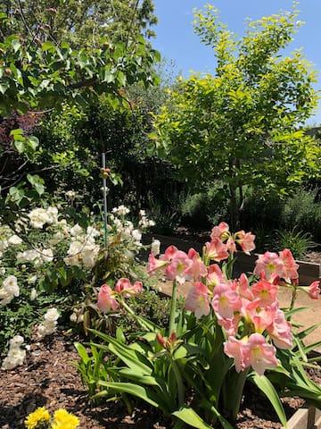 Garden in bloom!