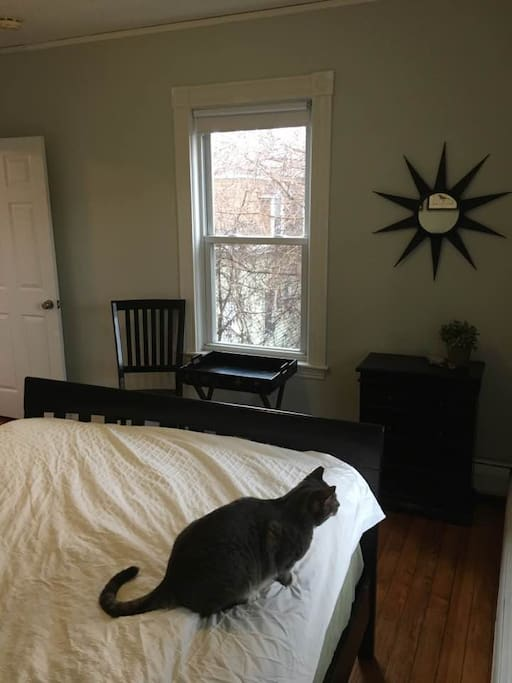 Back bedroom with queen-size, pillow-top mattress. (Cat not included.)