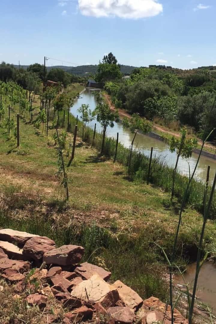 Vineyards Quinta da Rosa