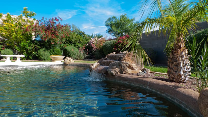 Phoenix Arizona Oasis Relaxation