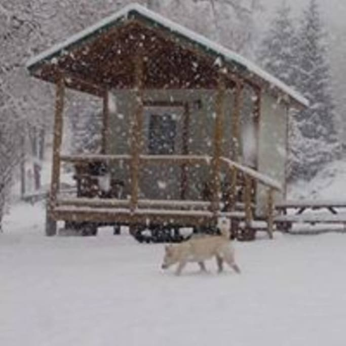 Pet friendly with a chance of snow