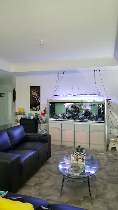 Relaxing lounge with Saltwater fishtank.