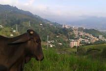 Vista desde el parqueadero. Hasta las vacas disfrutan la panoramica del Encanto