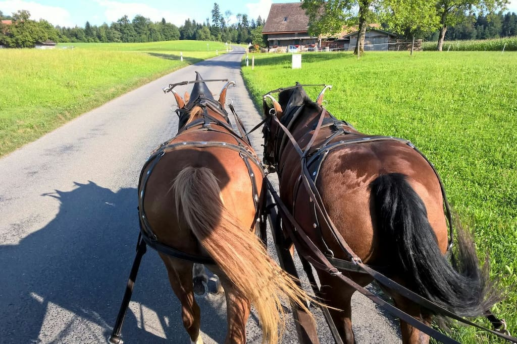unsere zwei Pferde
