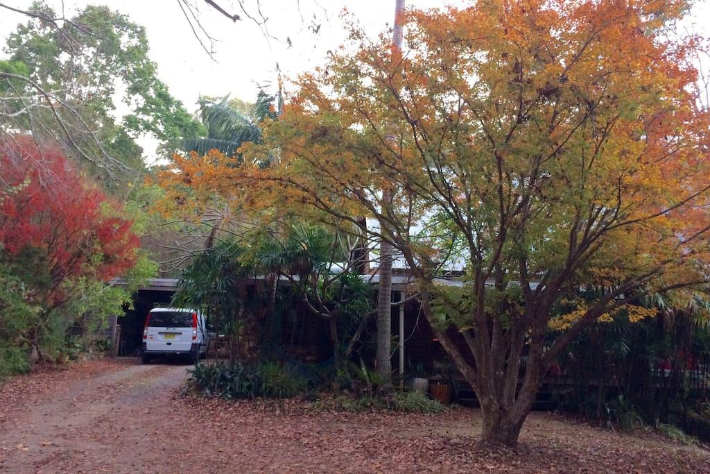 The last of autumn colours