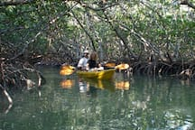 Mangrove Tunnels in the Nearby Bay