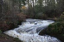 Kitsuksus Creek falls - 2 minute walk from the suite