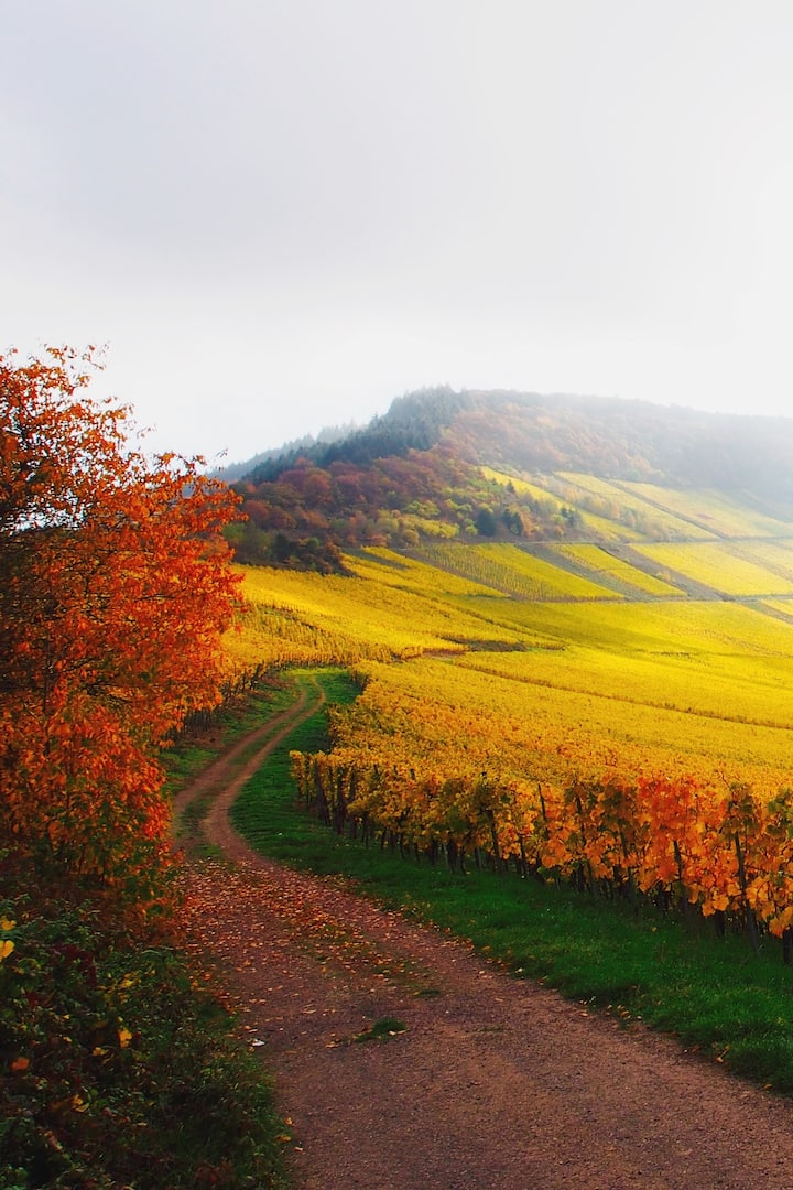 Weinberge an der Mosel im Herbst