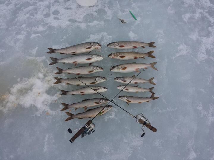 Catch trout!