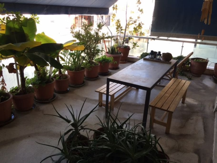 Wide balcony with plants