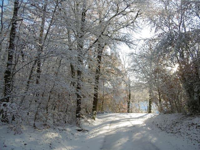 Beautiful winter walks