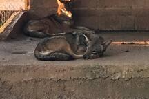 Iguanas zoo