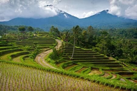 Bali Camping - Penebel - Tenda