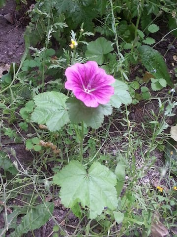 Farben im Garten :-)