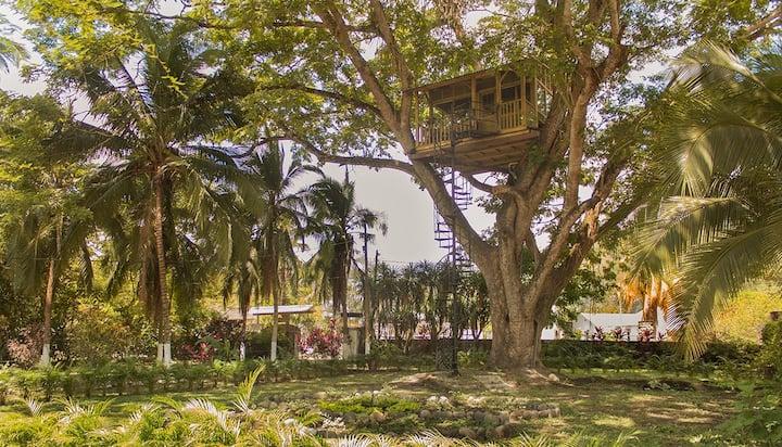 Casa del árbol en Útica , única en su estilo.