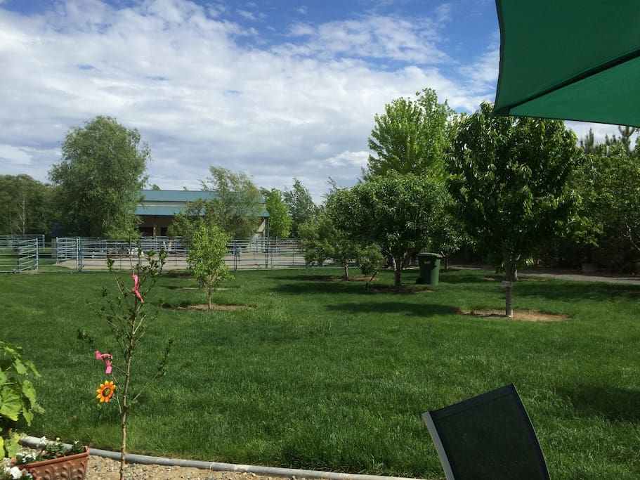 Looking out into orchard from guest yard.  Help yourself to whatever trees are producing fruit!  View the goats and wildlife that like this corner of the yard.