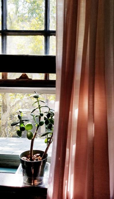 Room window.