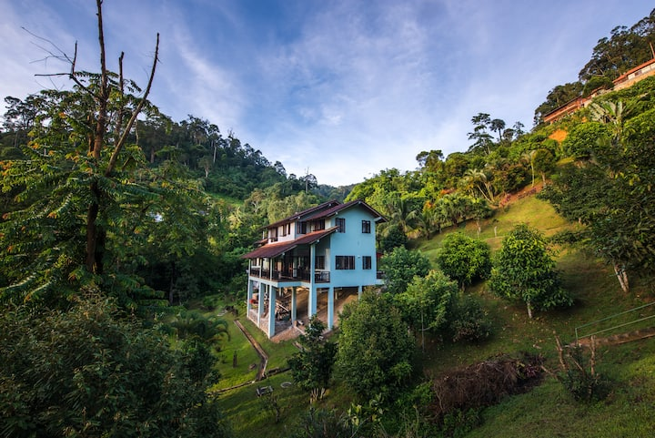 Rest. Pause. Rainforest Retreat