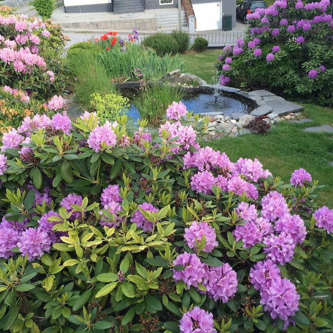 Flowers and little pond in front yard