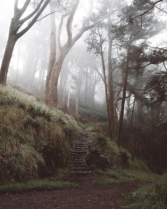 Photo of Mount Davidson in Sunnyside