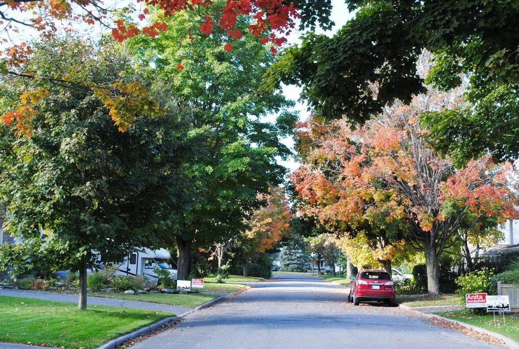 My street,, tranquil
