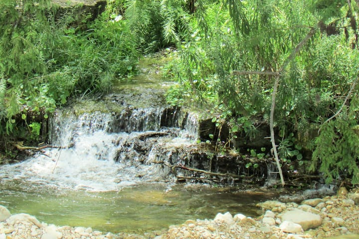 Utopia Springs~ Live Spring on the Sabinal