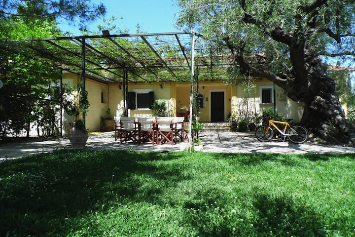 TheNi Olive Grove Villa