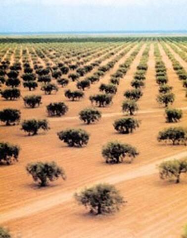 villa  d'une village entouré par les oliviers