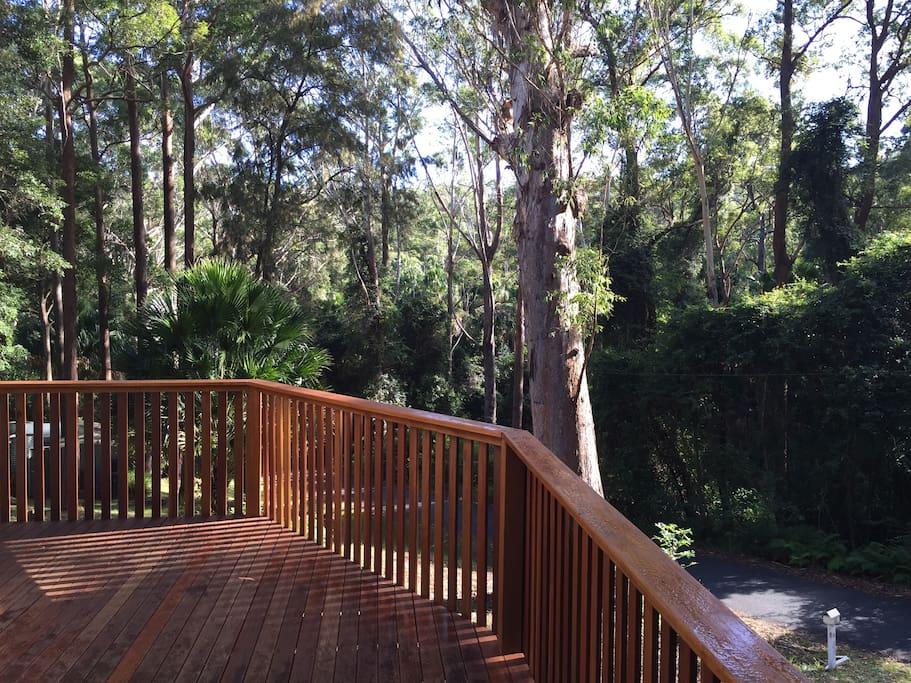 Rainforest Outlook