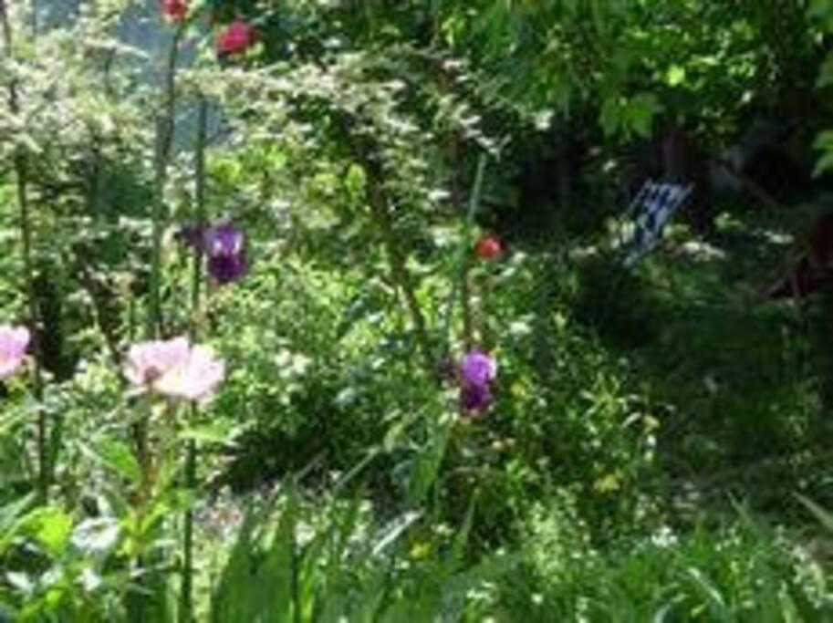 un coin du jardin d'environ 200 m2