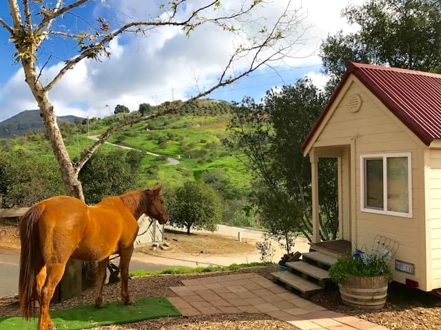 Imagine! A TINY HOUSE w TRAIL RIDING in Paradise - ฟอลบรูก - บังกะโล