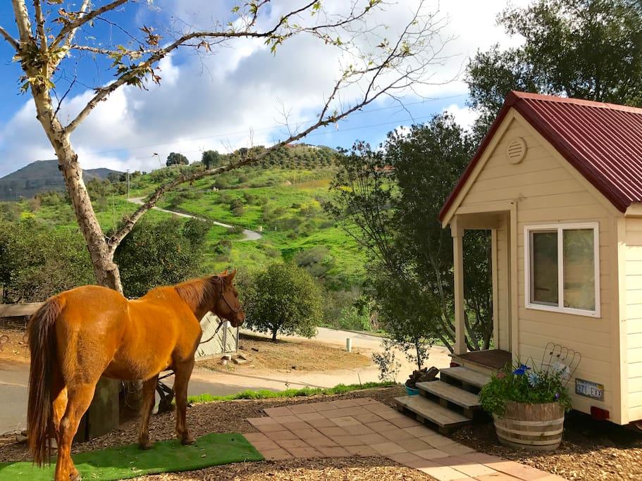Dinky & Tiny House