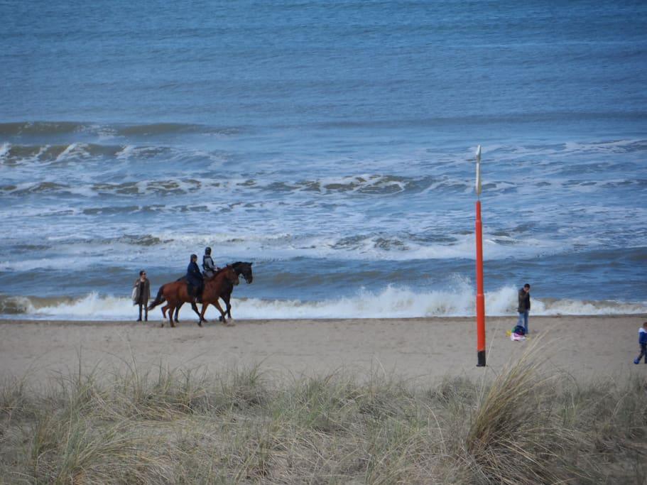 Beach plesure in Kijkduin