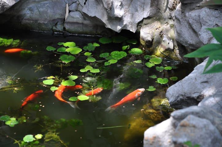 与拙政园、苏州博物馆比邻而居——体会江南人家小院生活 - Suzhou Shi - Appartamento