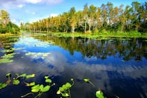 Okefenokee National Wildlife Refuge is about an hour from Jacksonville and is a beautiful day excursion to take.