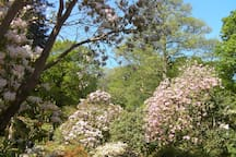 Clyne Gardens in May. Take romantic photos or enjoy an easy walk with amazing views of Swansea Bay from the top of the gardens.