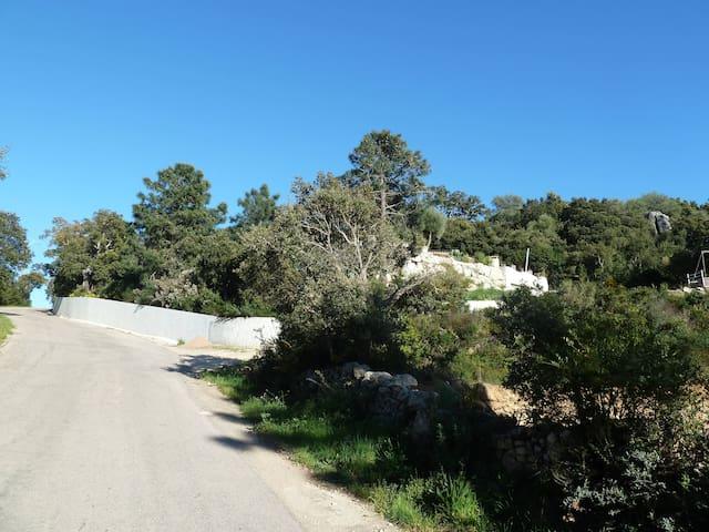 Route de Torraccia