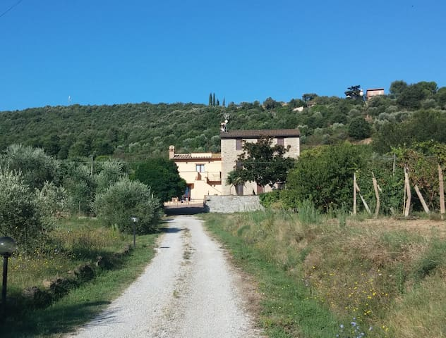 B&B Il Casale tra i Vigneti - Magione - Bed & Breakfast