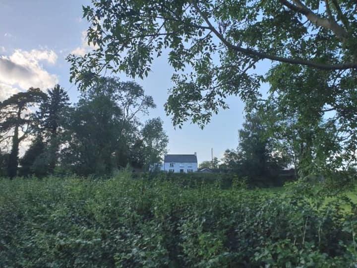 Authenic Irish Cottage in Nature Reserve