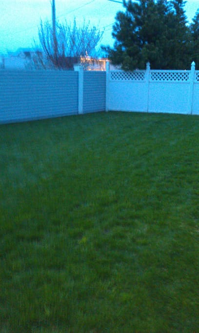 Grass Backyard