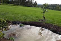 the new fish pond